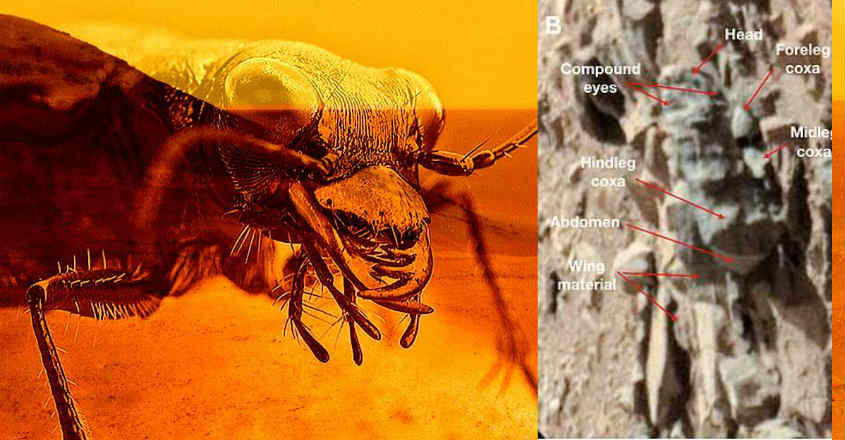 professor-discovered-insect-like-life-mars