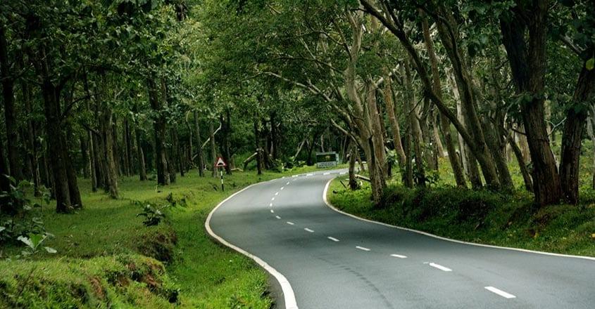 karnataka-forest
