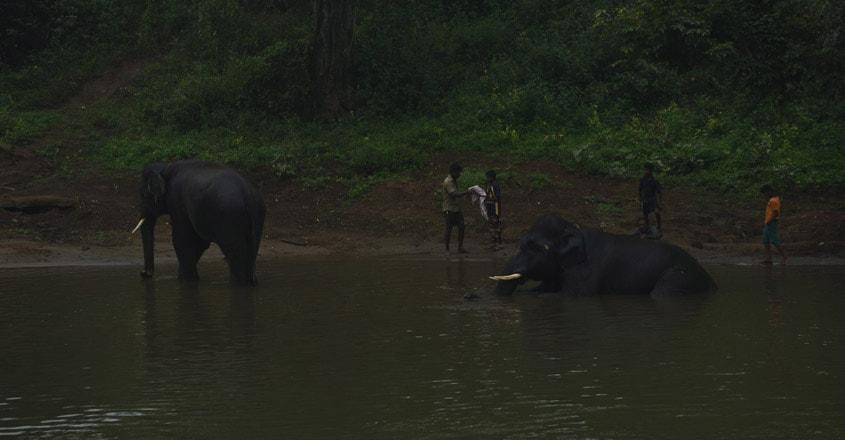 Mudumalai-National-Park1
