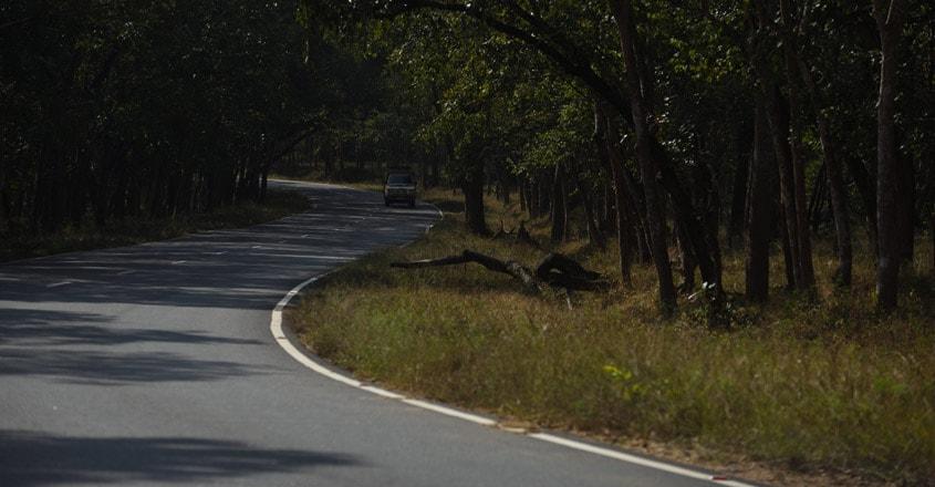 Mudumalai-National-Park5