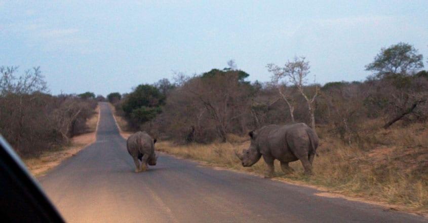 african-safari3