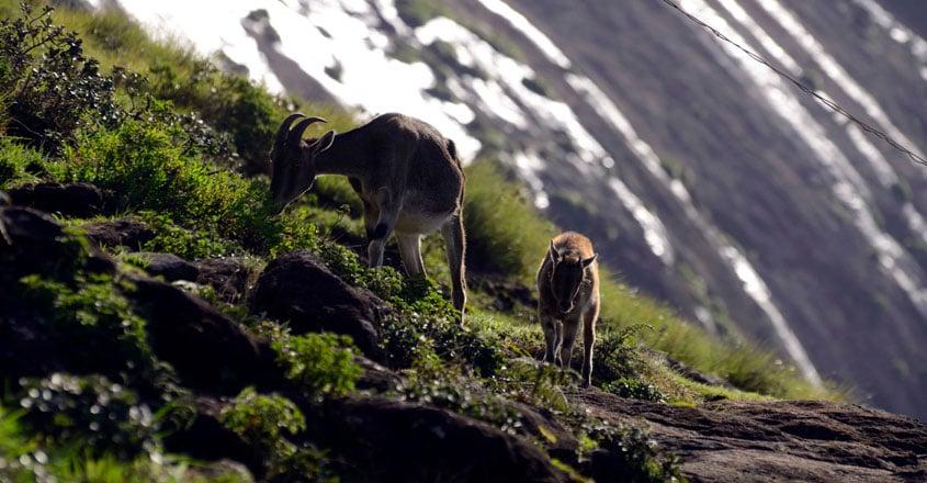 national-parks-in-kerala