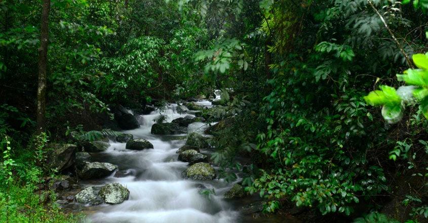 national-parks-in-kerala2