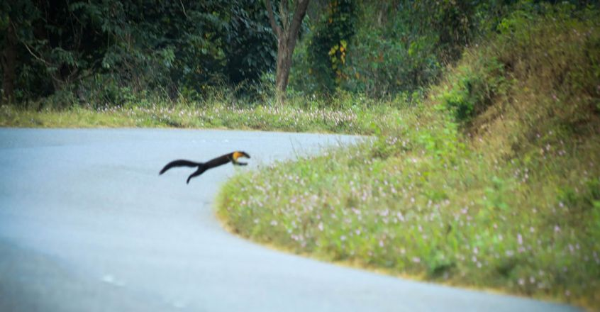 Sightings-of-Nilgiri-Marten-6