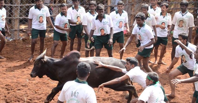 jallikettu-tamilnadu