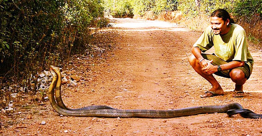 agumbe-king-cobra1