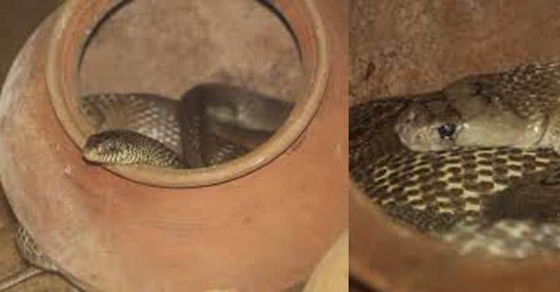 snake-park-chennai