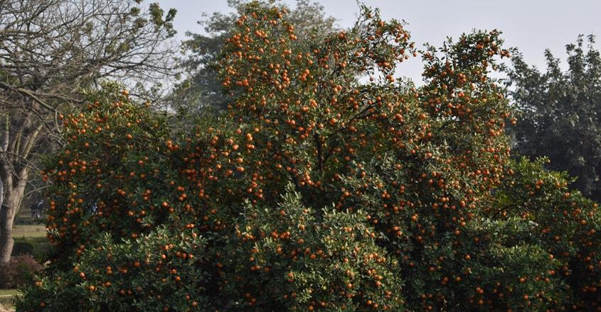 nagpur-orange-city1