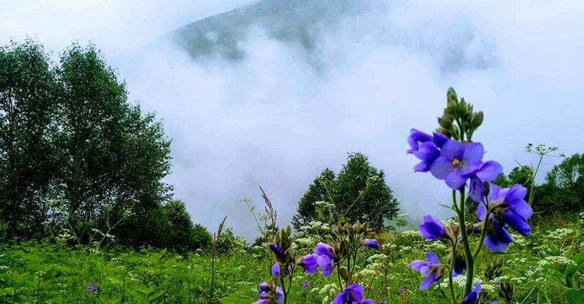 valley-of--flower1