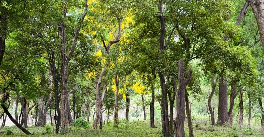 Marayoor-Sandalwood-Forest1