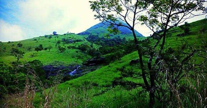 Rainforest-wayanad