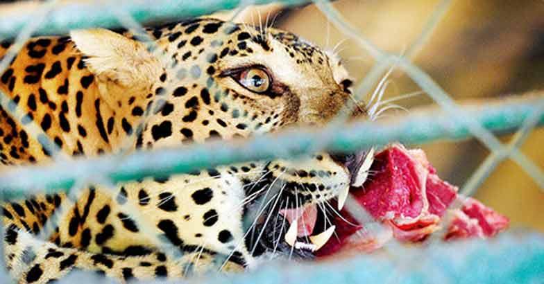 thrissur-zoo