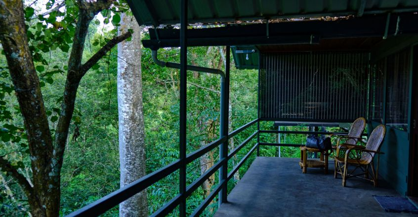 Wayanad-Wildlife-Resort1