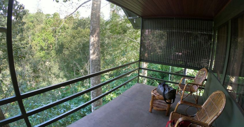 Wayanad-Wildlife-Resort5