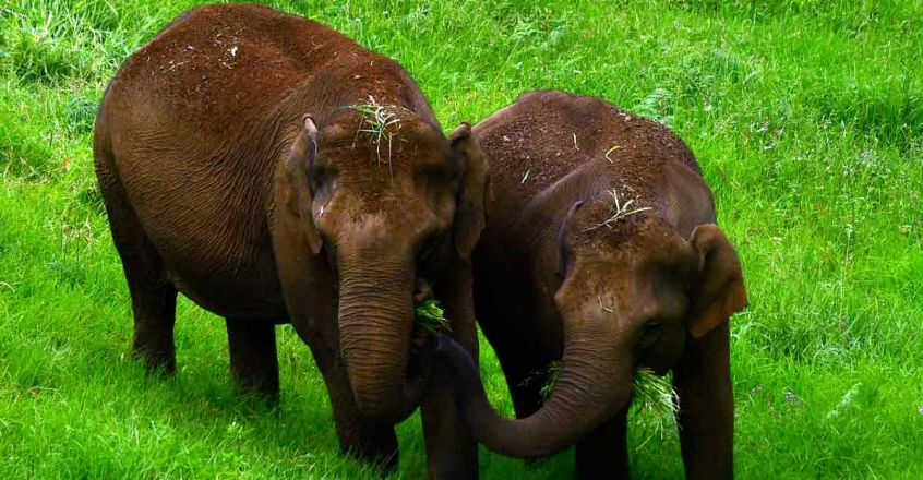8maatupetty-wild-elephants