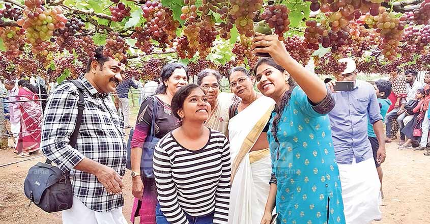 idukki-grapes