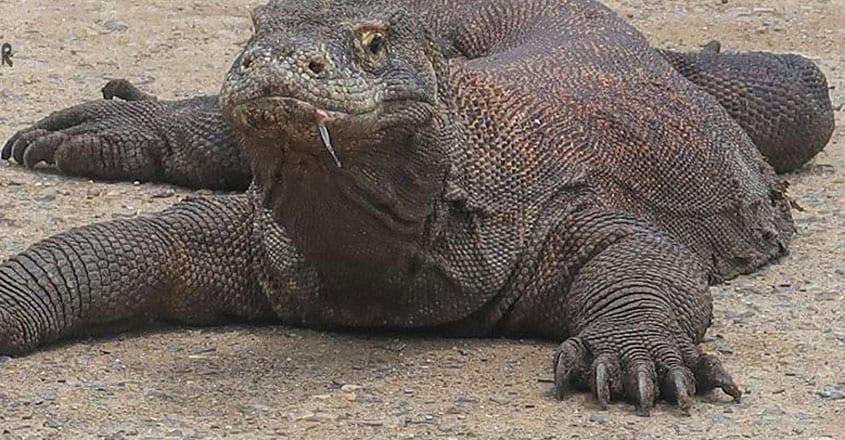 Komodo-National-Park.2