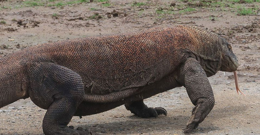 Komodo-National-Park.4
