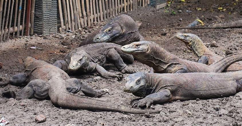Komodo-National-Park.9