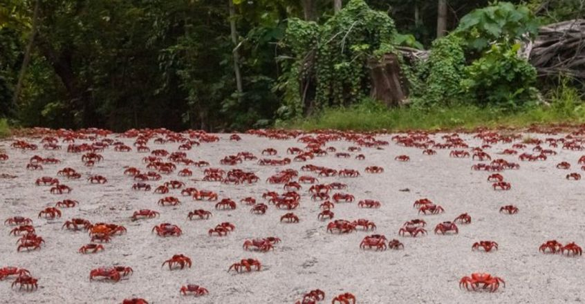 crabs-on-road-credit-wondrous-world-images-h-1366x410
