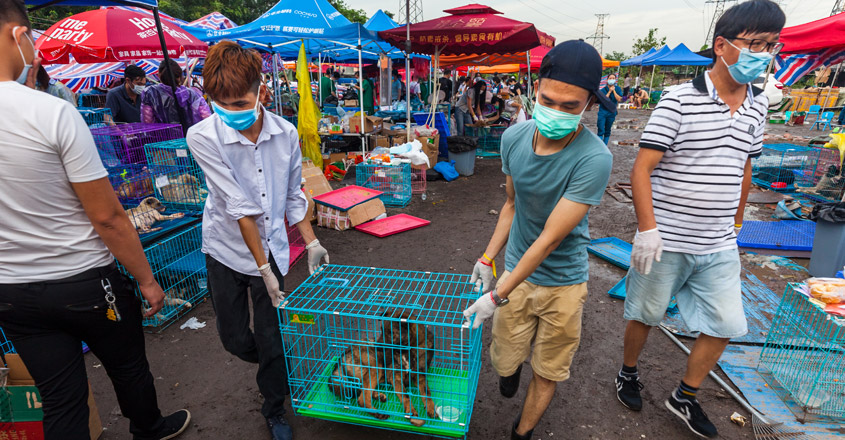 dog-meat-festival-china