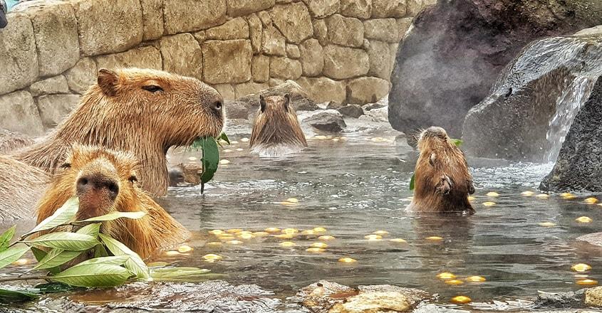 Izu-Shaboten-Zoo1