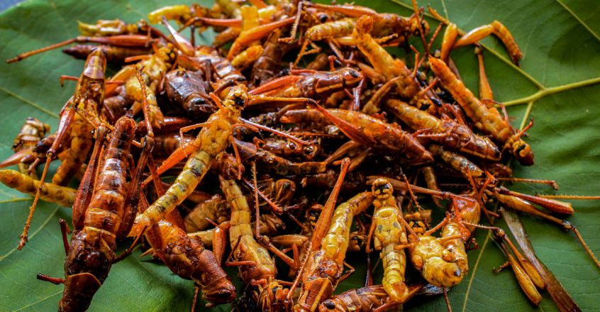 Fried-Grasshoppers